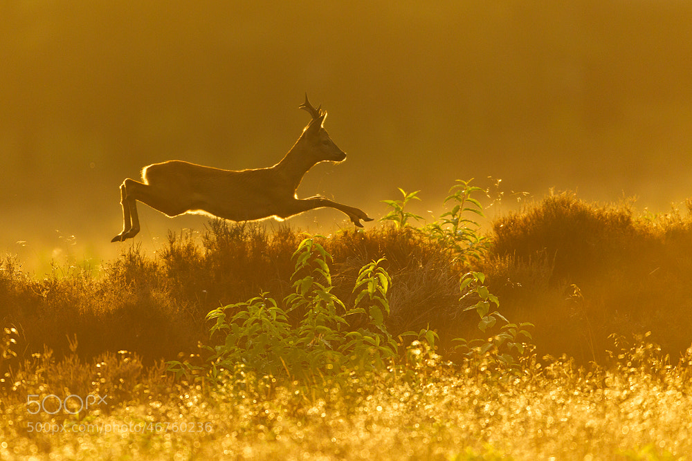 Photograph Jump!! by René Visser on 500px