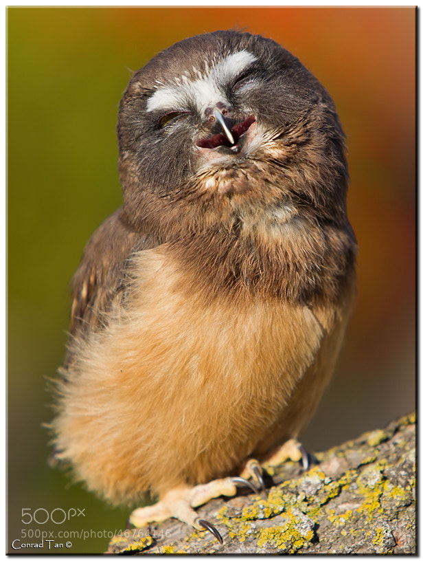 Photograph Happy Owl by Conrad Tan on 500px