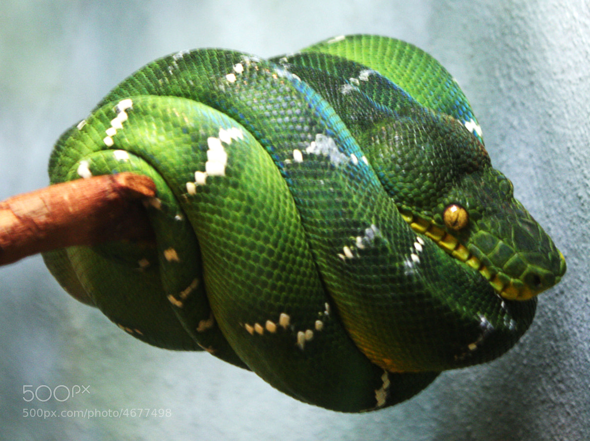 Photograph Snake by David Francés on 500px