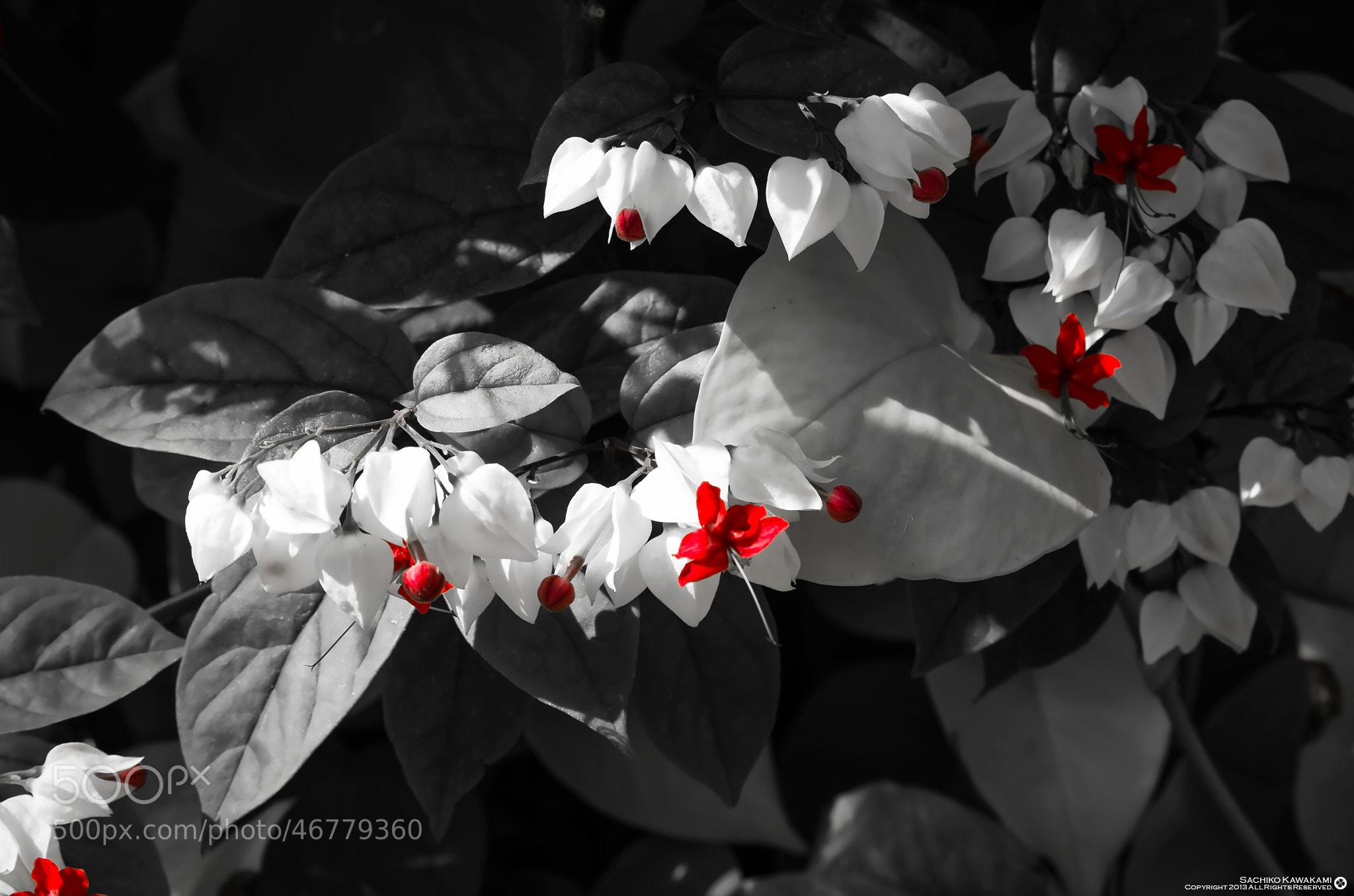 Photograph Red and black balance by Sachiko Kawakami on 500px