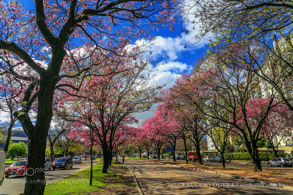 Photograph AV. ÉRICO VERÍSSIMO by Glauccio Dutra on 500px