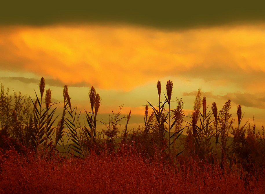 Photograph Blowing in the wind by Jenny Haritou on 500px
