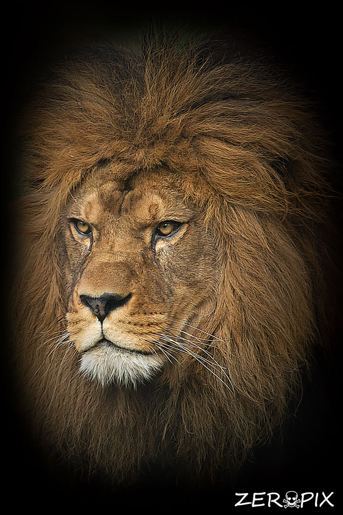 Photograph Portrait of the king by ZeroPix Photography on 500px