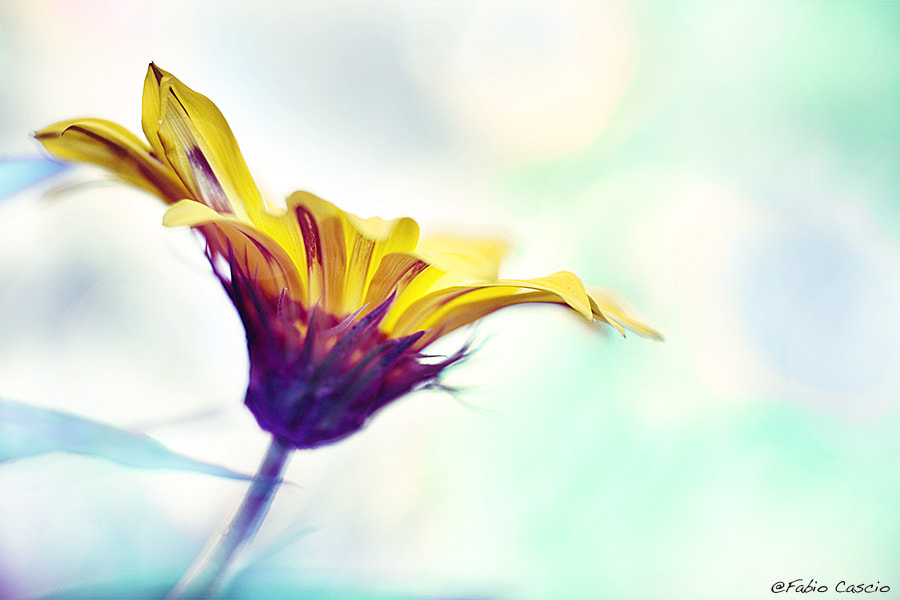 Photograph Flower in 3D by Fabio Cascio on 500px
