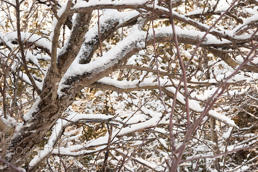 A Tangle of Snow by Stewart Stick (stickshots)) on 500px.com