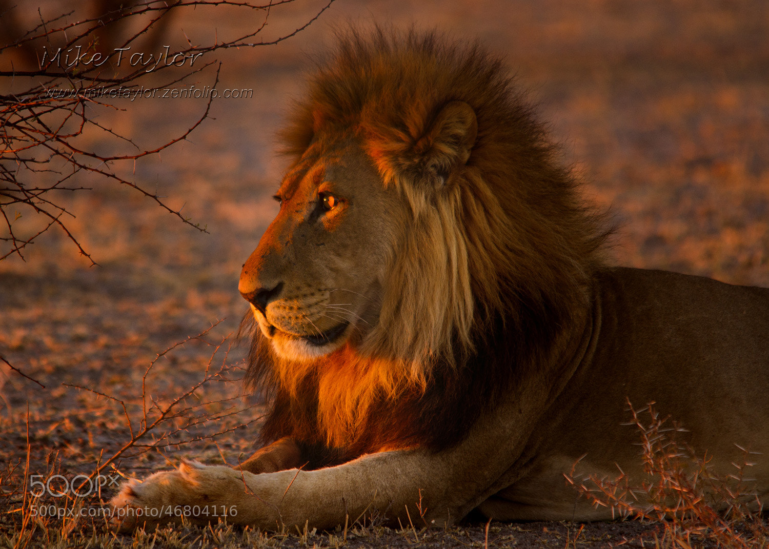 Photograph Enjoying the Last Rays by Mike Taylor on 500px