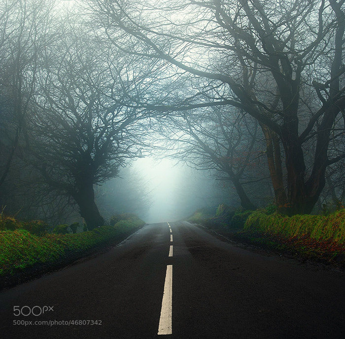 Photograph Guardians of endless road by Lukasz Maksymiuk on 500px