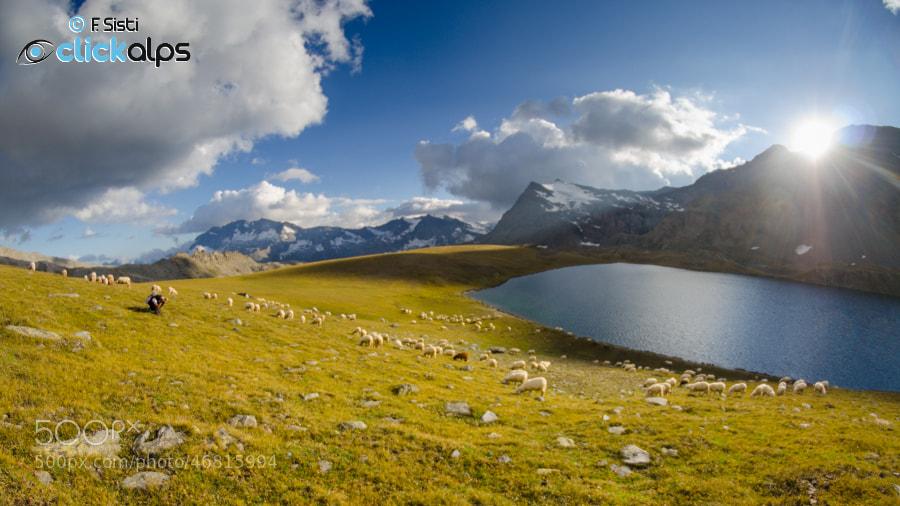 Photograph Il gregge di Piero... (Valsavarenche, Parco Nazionale Gran Paradiso, Valle d'Aosta) by Francesco Sisti on 500px
