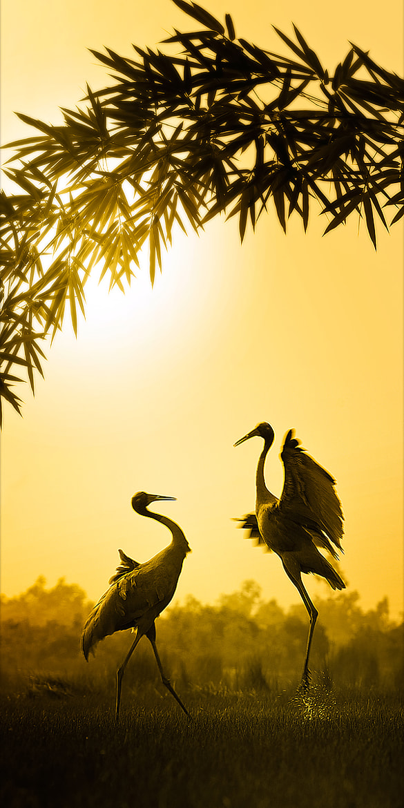 Photograph Red-headed crane by NguyenHoangNam on 500px