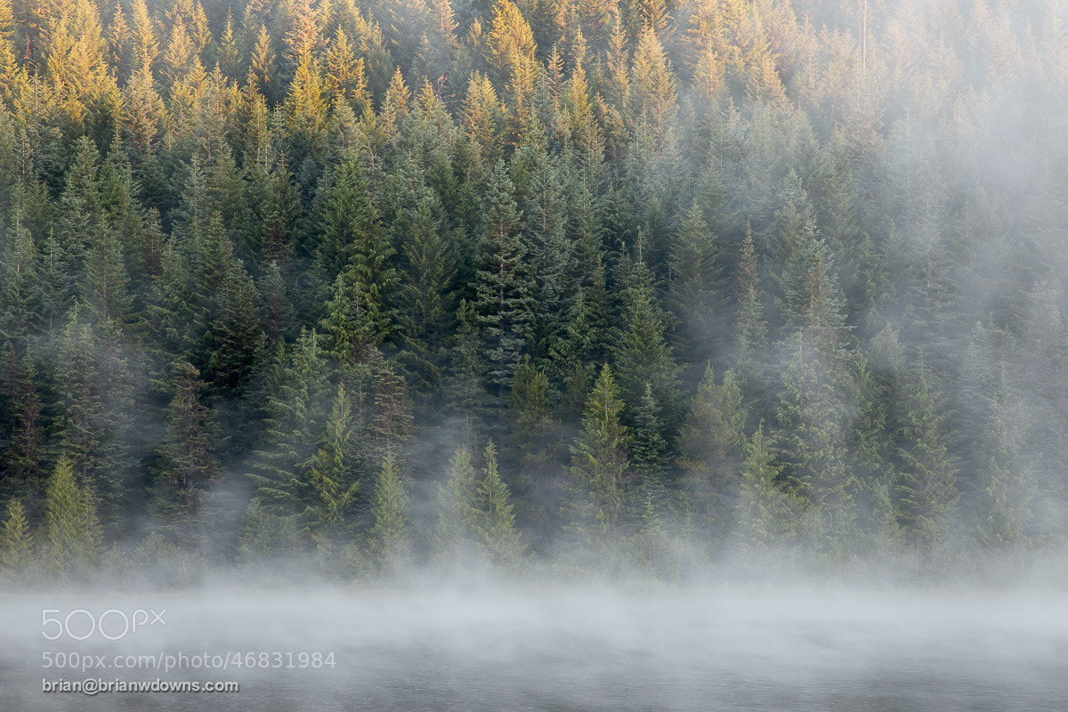 Photograph Early morning Light & Fog @ Trillium Lake by Brian Downs on 500px