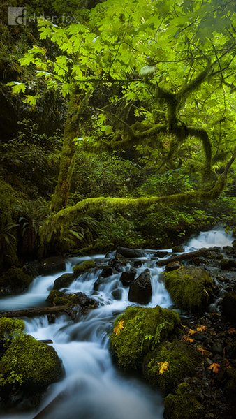 Photograph Lush by Dylan Fox on 500px