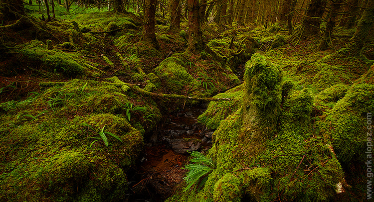 Photograph Green World (2) by Gorka Lopez on 500px