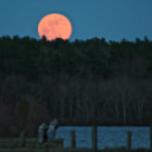 This Pink moon came out in April, biggest moon I have seen in a long time. I thought it was wonderful to see fishermen, fishing under the big Pink Moon.