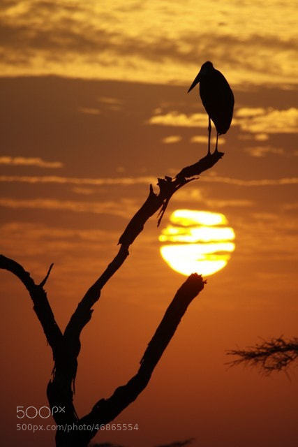 Photograph Serengeti sunrise by AnthillTiger on 500px