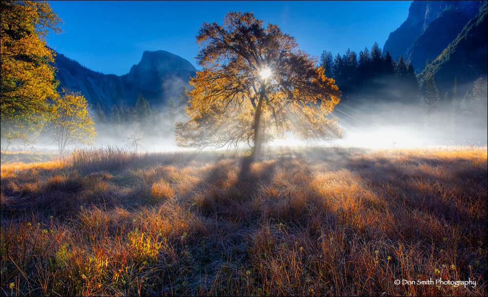 Photograph Magical Fall Morning, Yosemite National Park by Don Smith on 500px