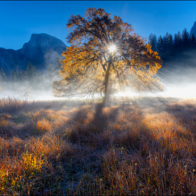 Magical Fall Morning, Yosemite National Park by Don Smith on 500px.com