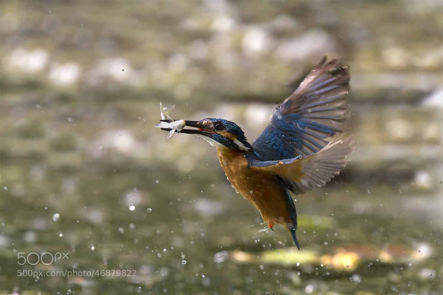 Photograph Drop by Marco Redaelli on 500px