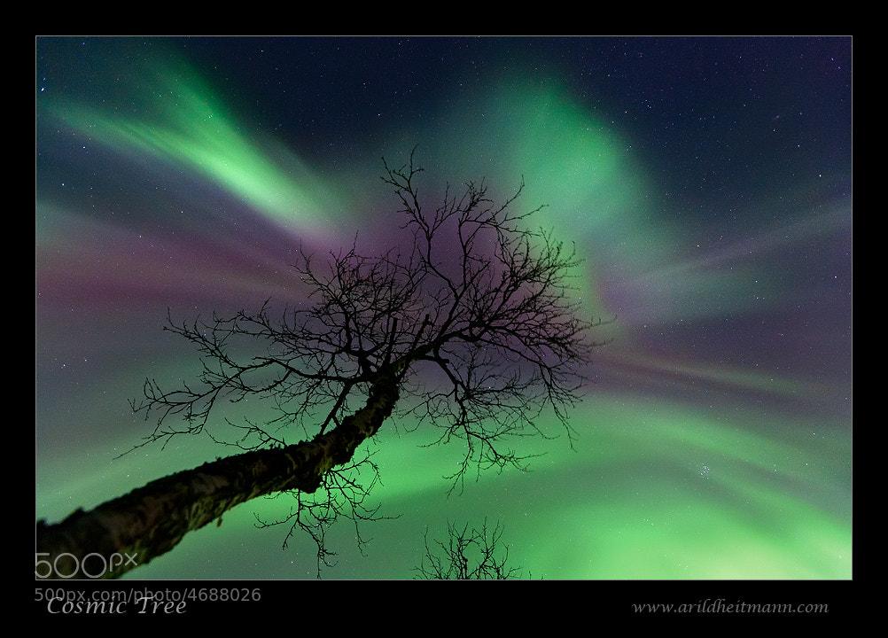 Photograph Cosmic Tree by Arild Heitmann on 500px