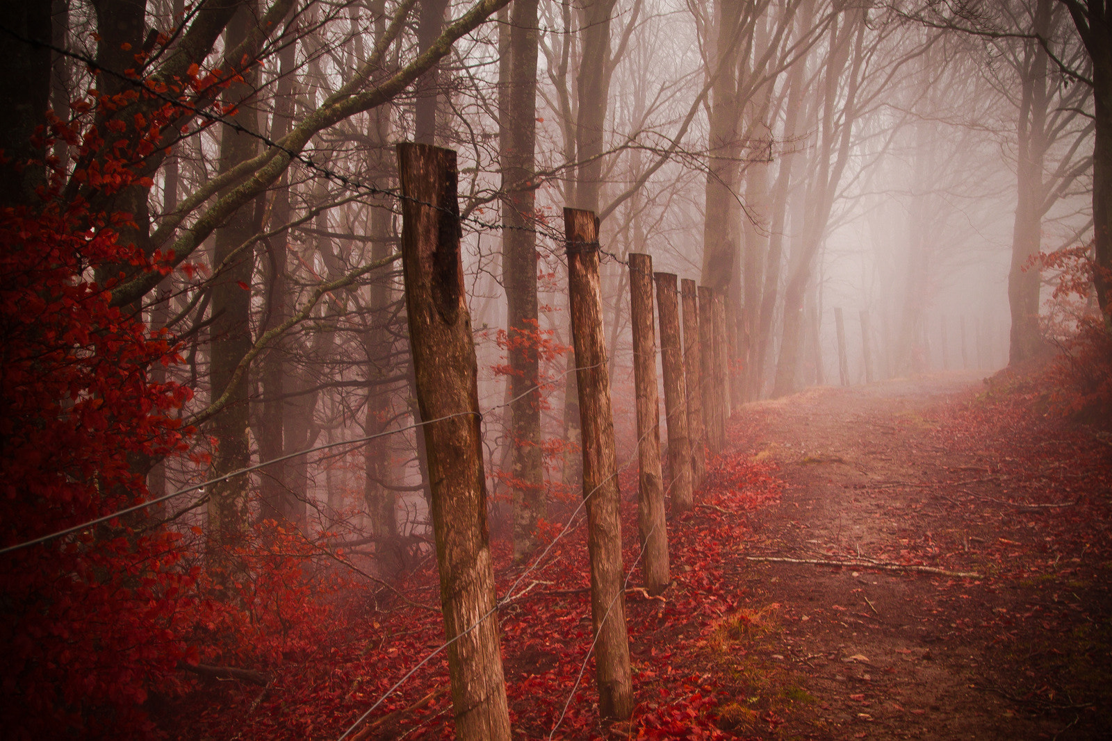 Photograph The path with no name by David Butali on 500px