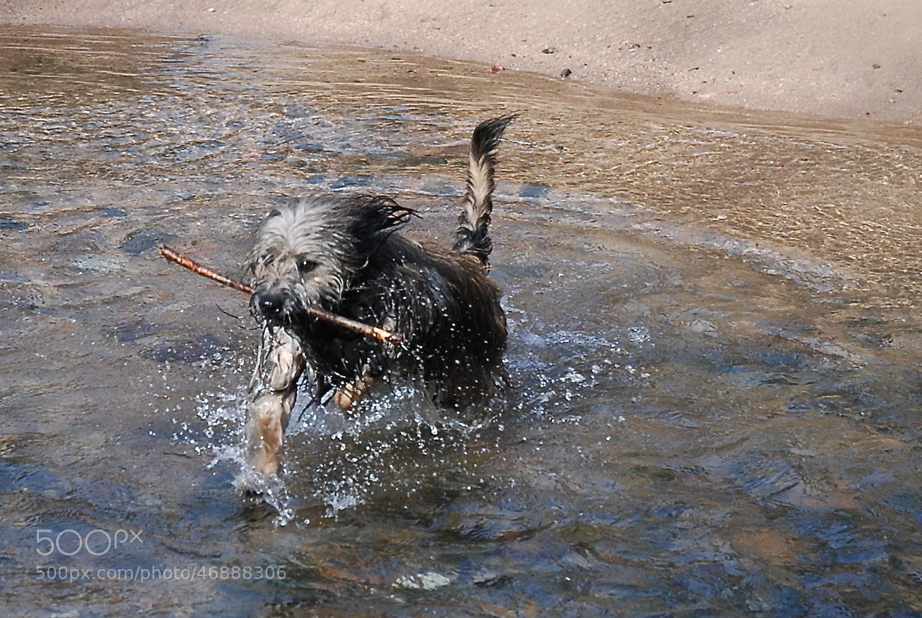 Photograph Jugando by Jose Maria Vidal Sanz on 500px