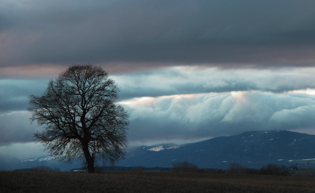 Photograph a single tree in january by Tiago Quinteiro on 500px