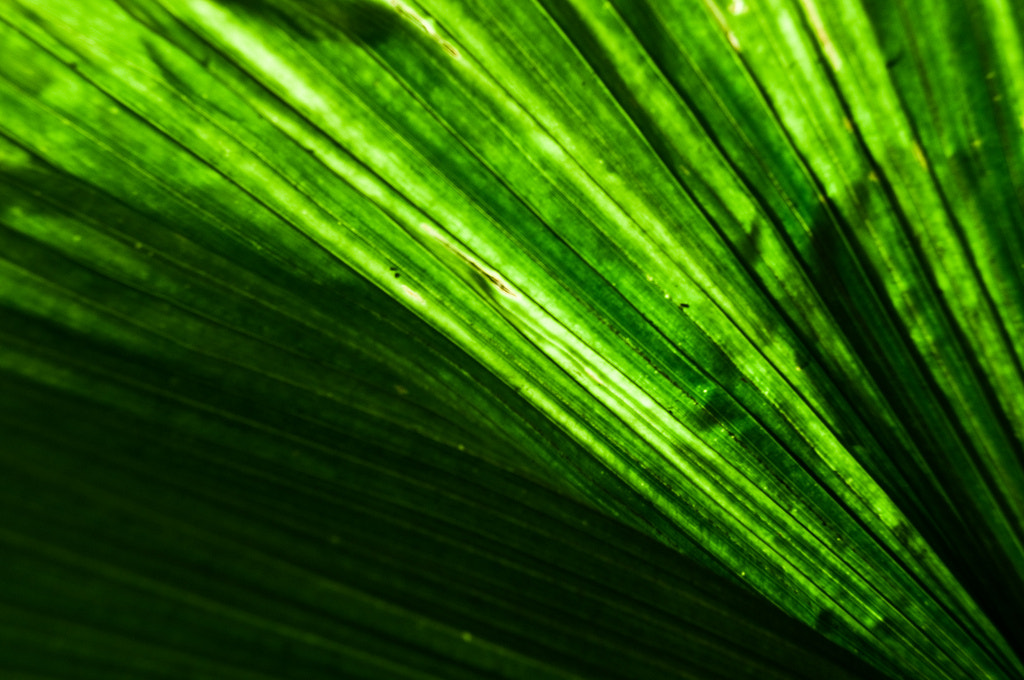 Photograph Green by Gabriel Gabs on 500px