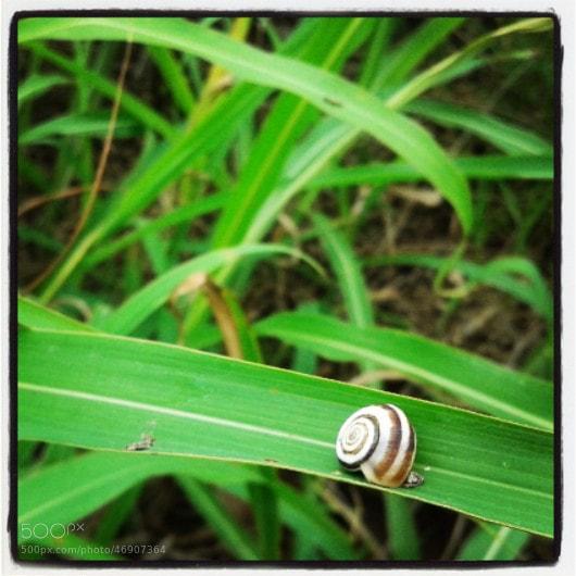 Photograph lonely snail by Zahra Darivandi on 500px