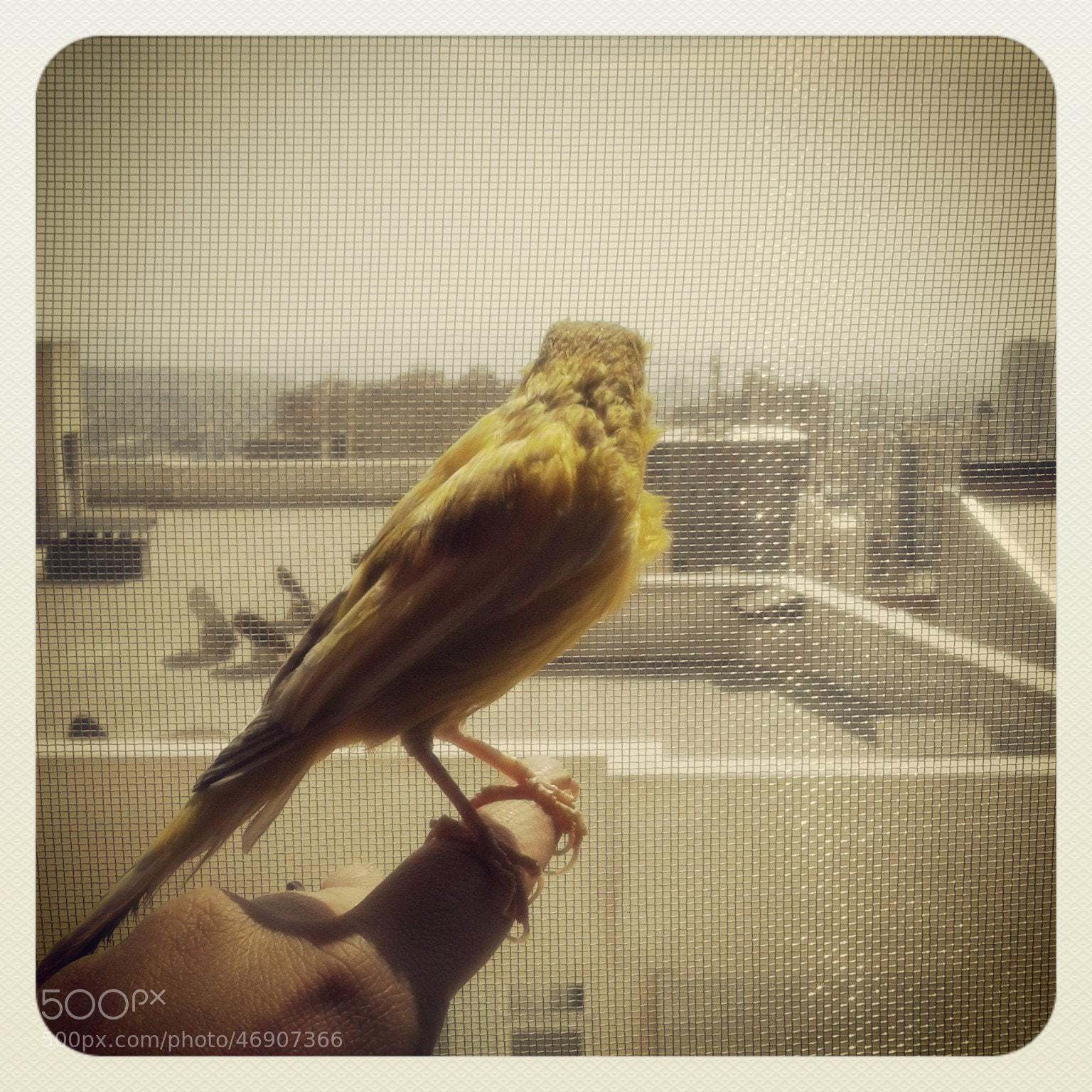 Photograph Dream of fly by Zahra Darivandi on 500px