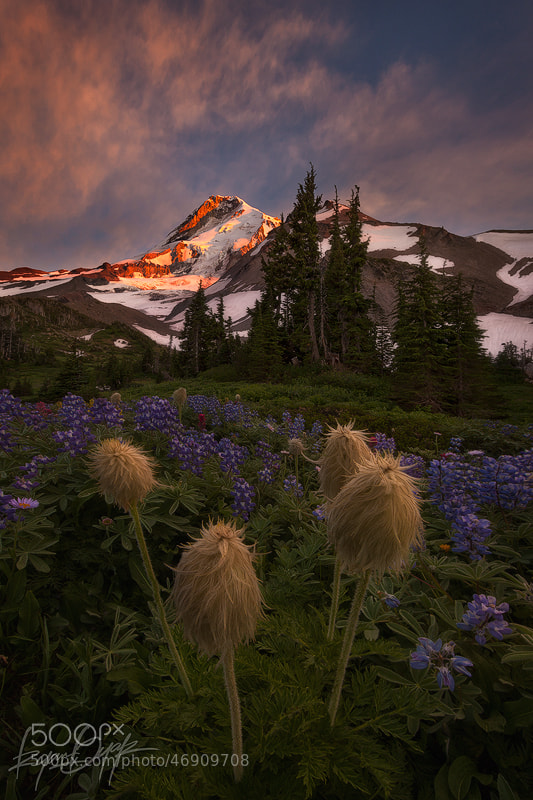 Photograph Out Flanked by Ryan Dyar on 500px