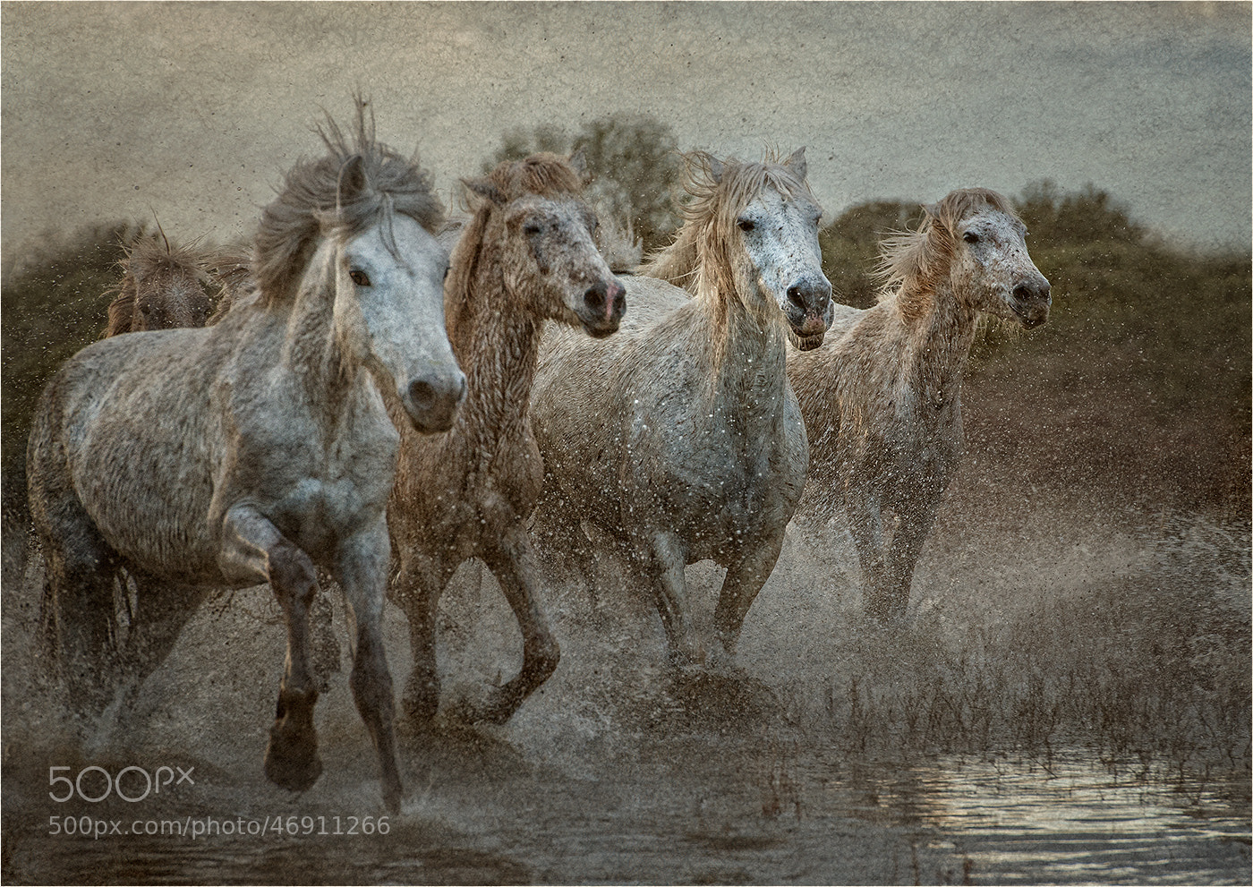 Photograph Wild Horses by Jane M  Lines on 500px