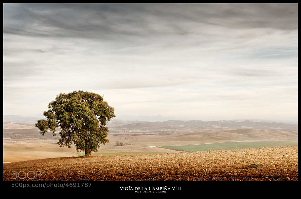 Photograph Vigía de la Campiña VIII (Watchtower of the Countryside VIII) by Manuel Millán on 500px