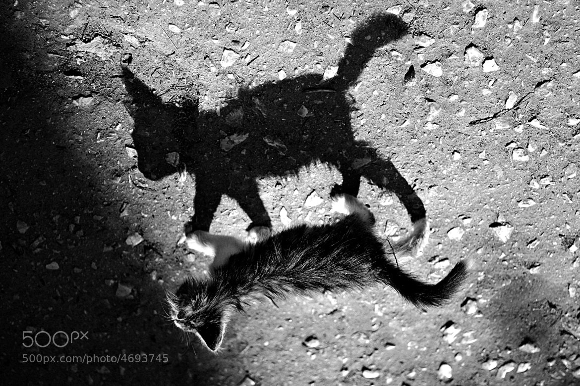 Photograph Me and my shadow(Я и моя тень) by Eduard Dzerzhanovsky on 500px