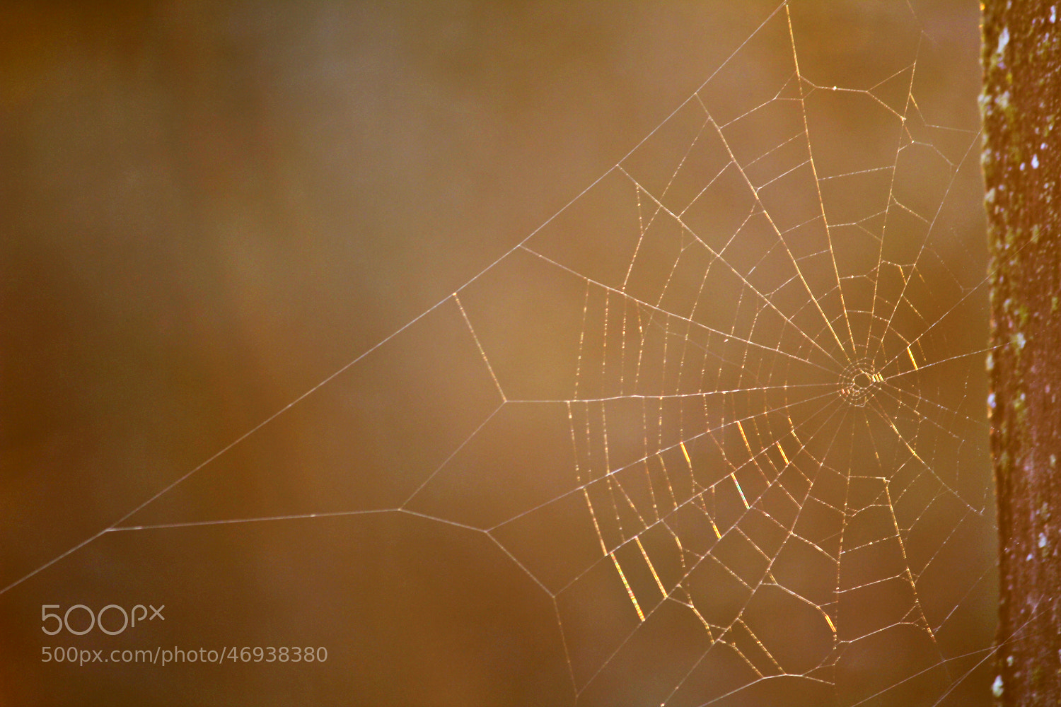 Photograph spider by Igor Arsovic on 500px