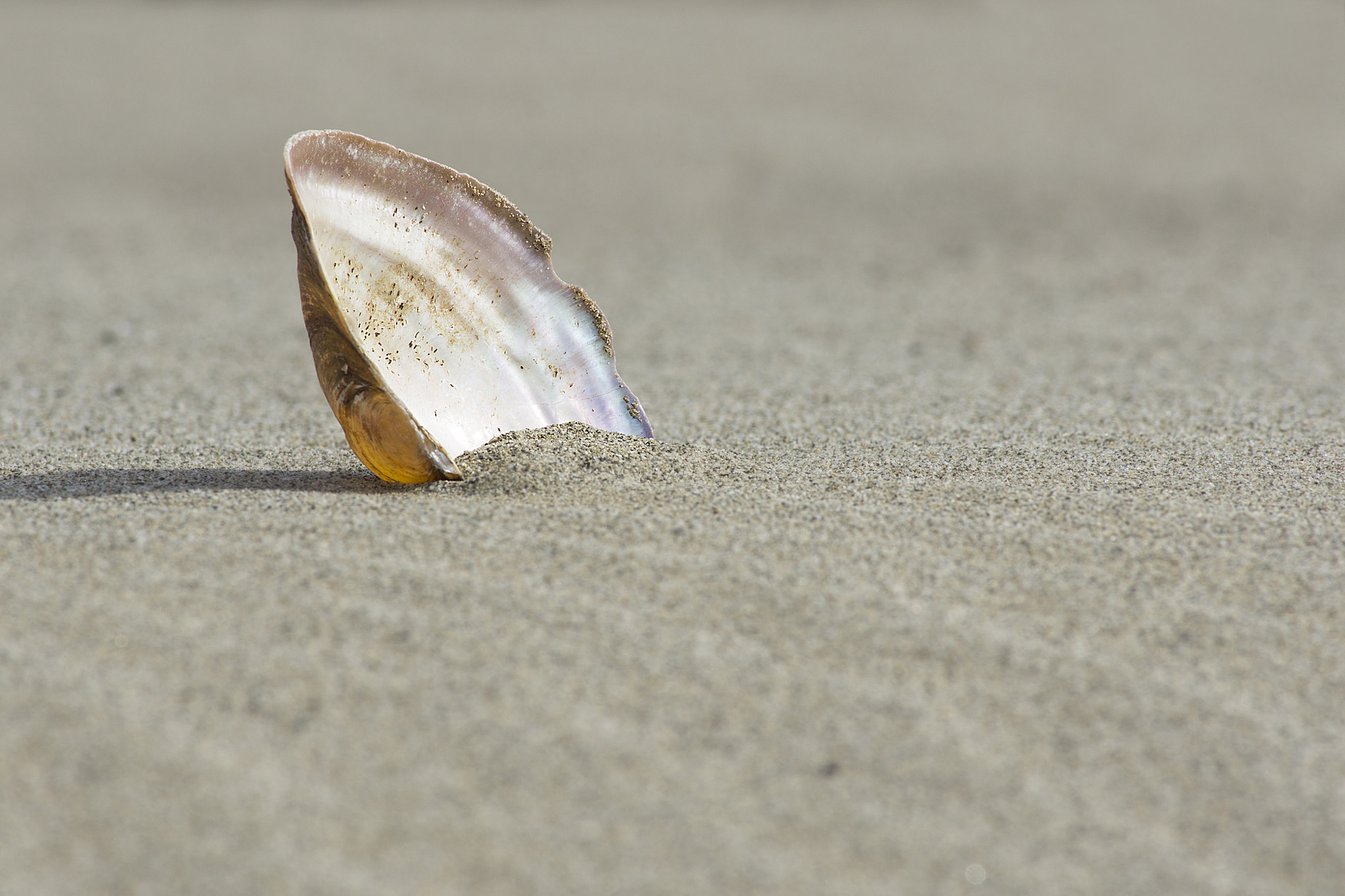 Photograph River shell by Francesca Moscatelli on 500px