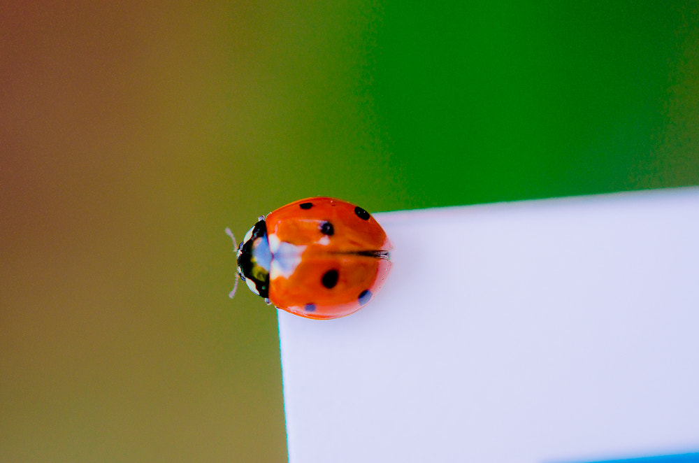 Photograph Ladybird on the edge by Tom Tolkien on 500px