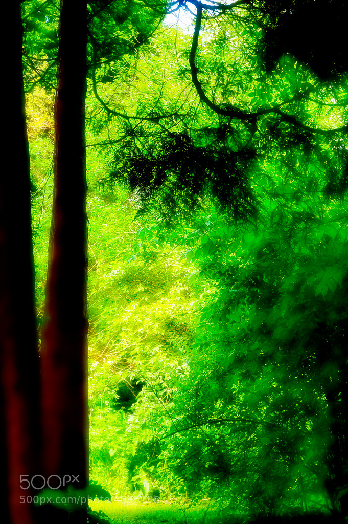 Photograph Forest glow by Tom Tolkien on 500px