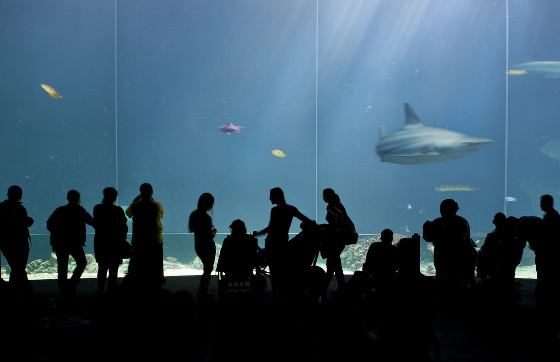 Photograph The Aquarium by Valentijn Tempels on 500px