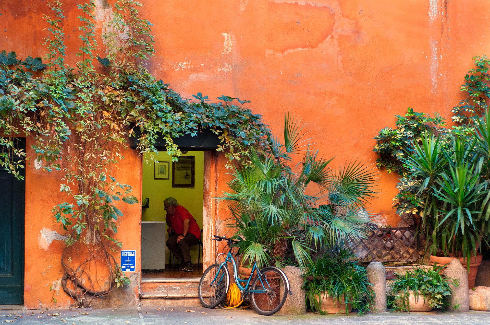 Photograph Wall and plant by Marcello Ceraulo on 500px