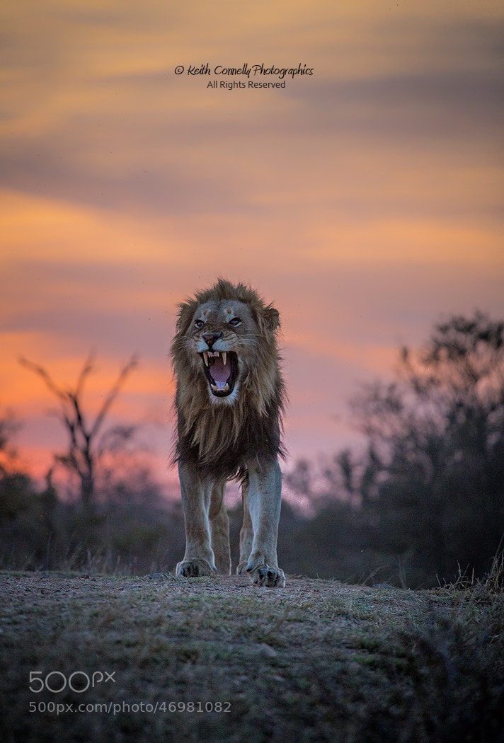 Photograph Fierce by Keith Connelly Photographics on 500px