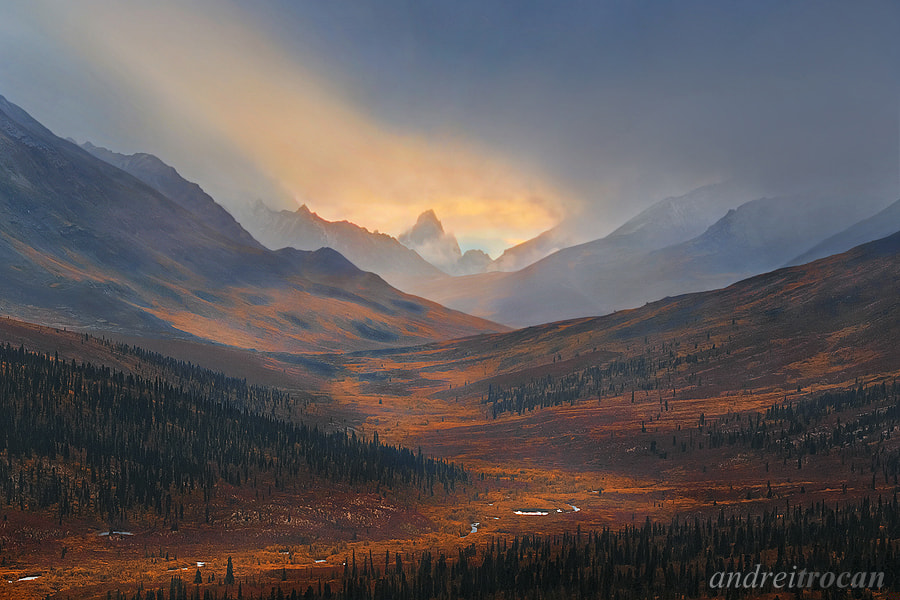 Photograph Golden River by Andrei Trocan on 500px