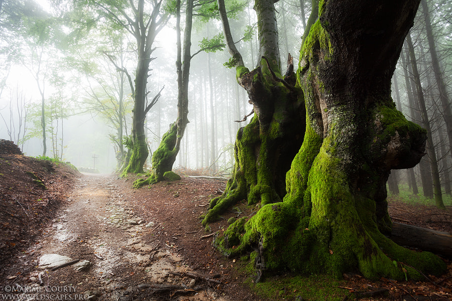 Photograph Bright Light by Maxime Courty on 500px