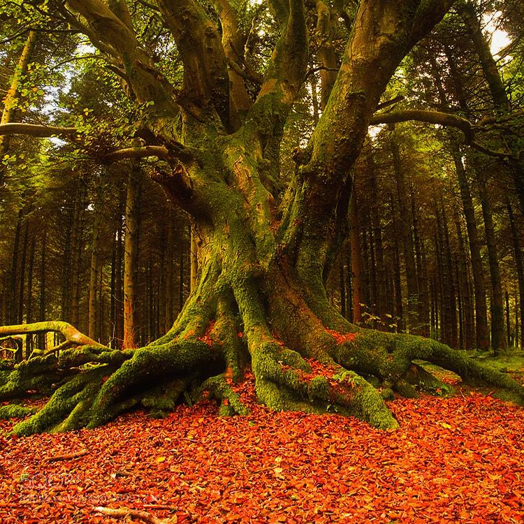Photograph Power of nature by Lukasz Maksymiuk on 500px