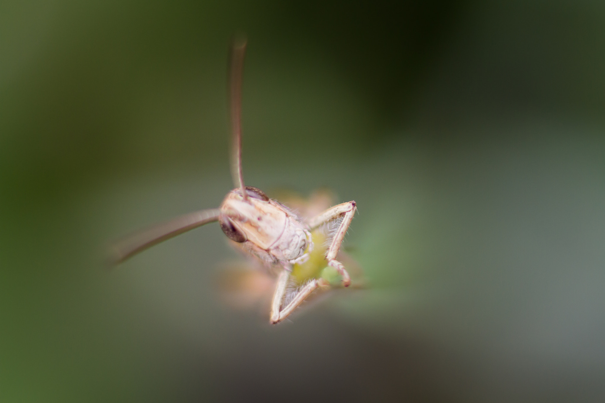 Photograph Grass Hopper by Marc Guille on 500px