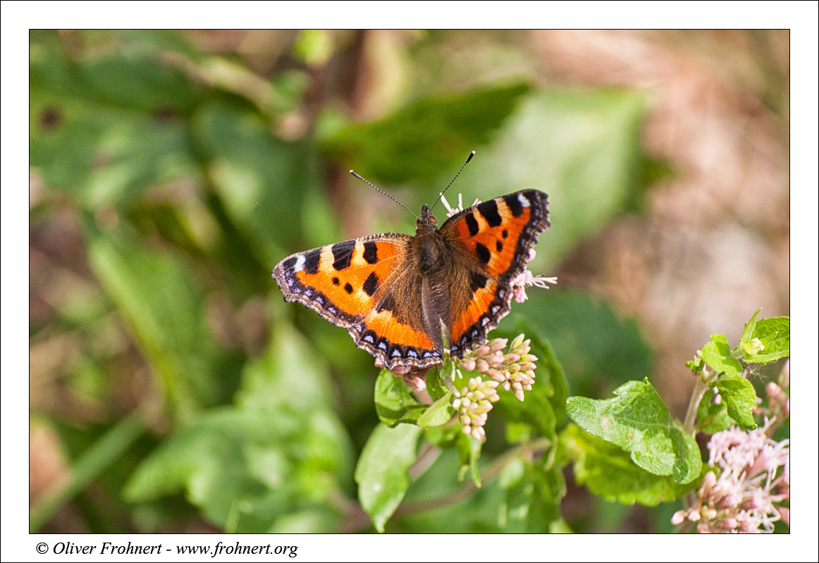 Photograph Butterfly by Oliver Frohnert on 500px