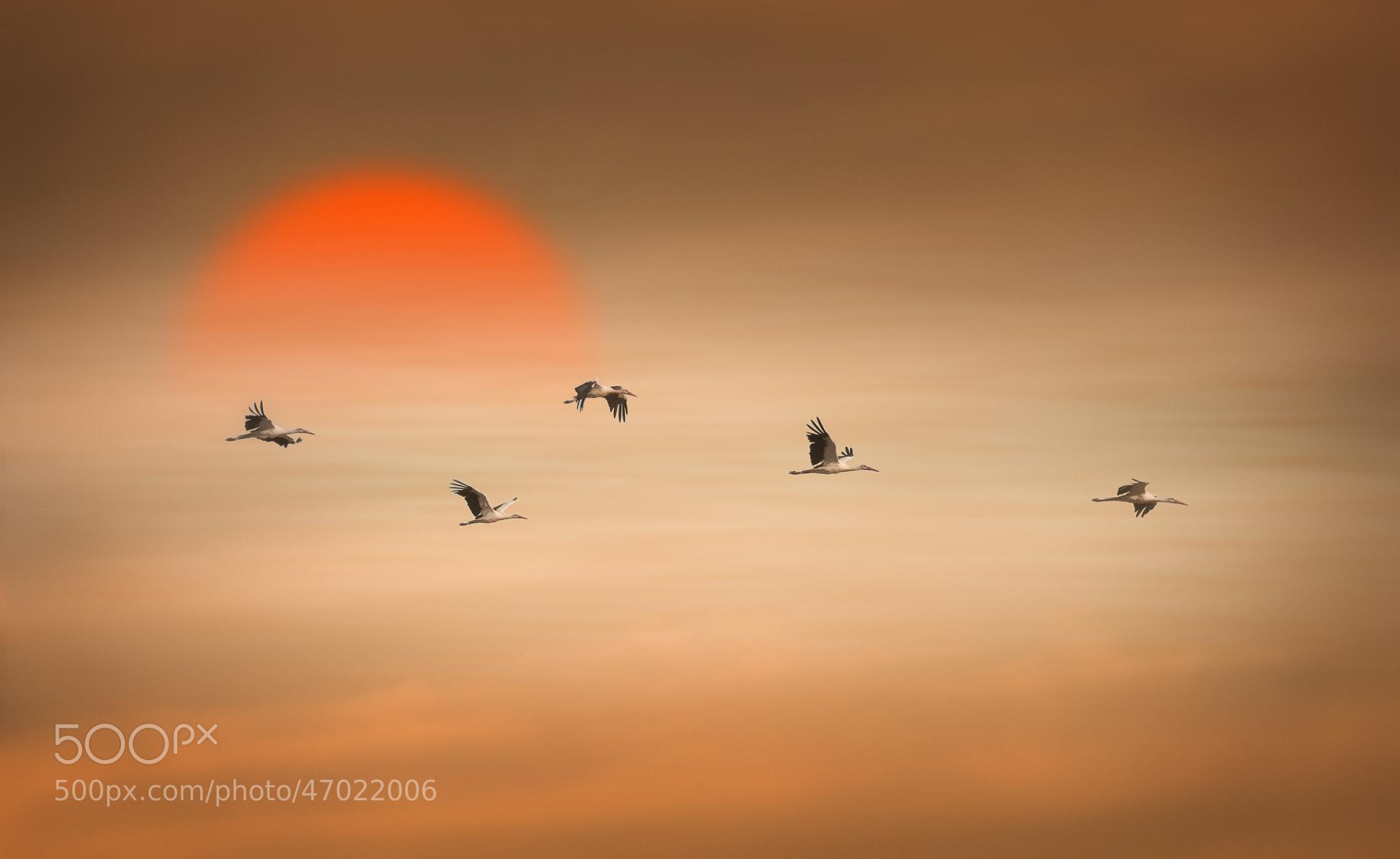 Photograph Storks at Sunset by Hani Latif Zaloum on 500px
