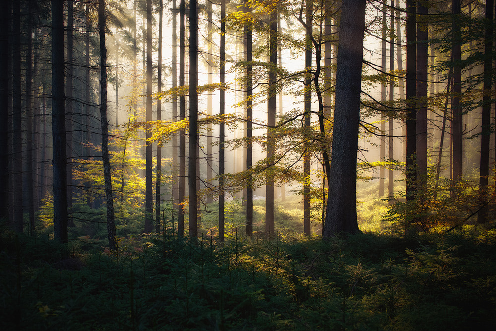 Photograph the forest awakens by Dennis Fischer on 500px