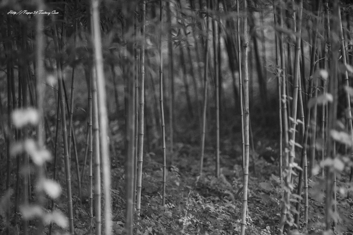 Photograph bamboo forest by kim chaejin on 500px