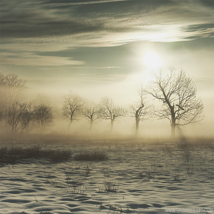 Photograph fog by Justyna SinBro on 500px