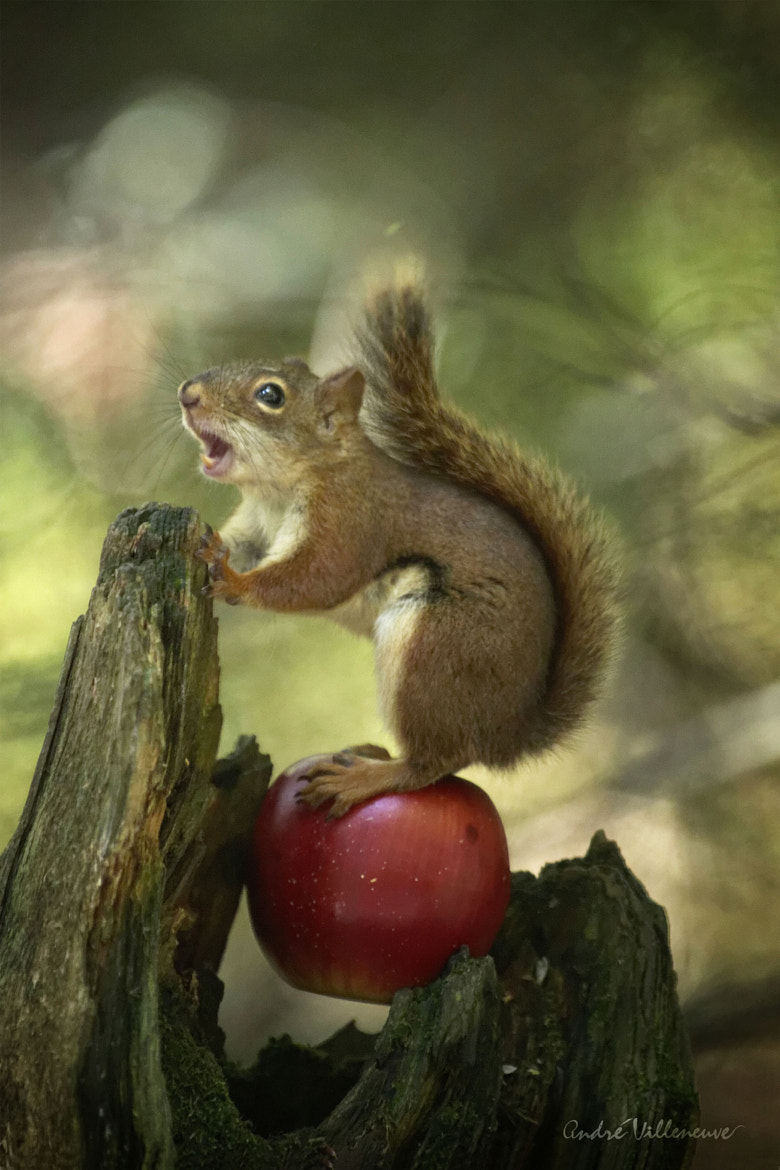 Photograph An apple singer by Andre Villeneuve on 500px