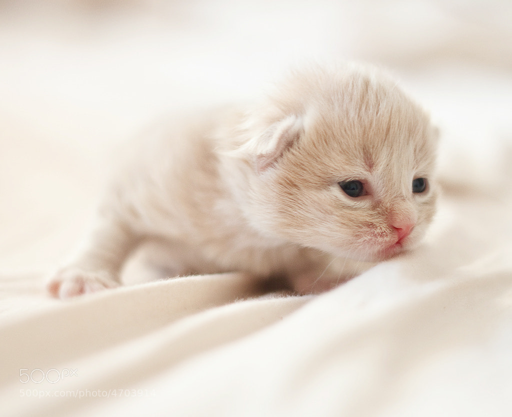 Newborn Kitten by Christian Holmér